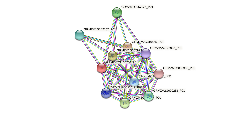GRMZM2G105256_P01 protein (Zea mays) - STRING interaction network