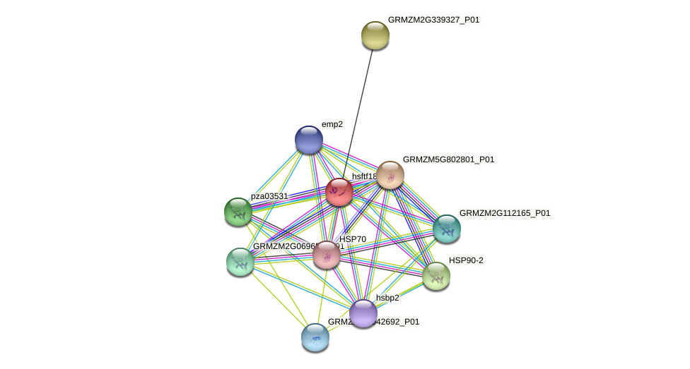 Zm.96358 protein (Zea mays) - STRING interaction network