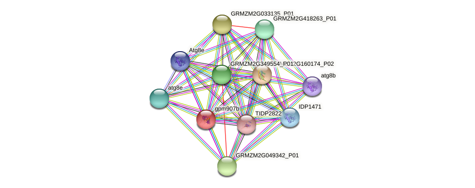 gpm907b protein (Zea mays) - STRING interaction network