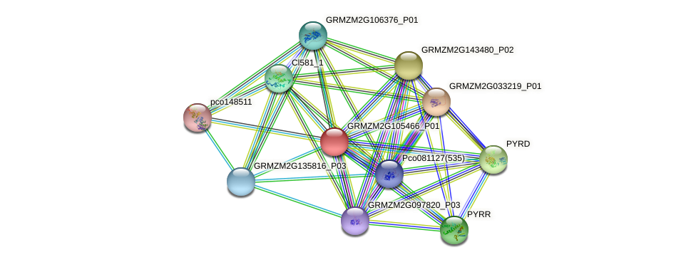 GRMZM2G105466_P01 protein (Zea mays) - STRING interaction network