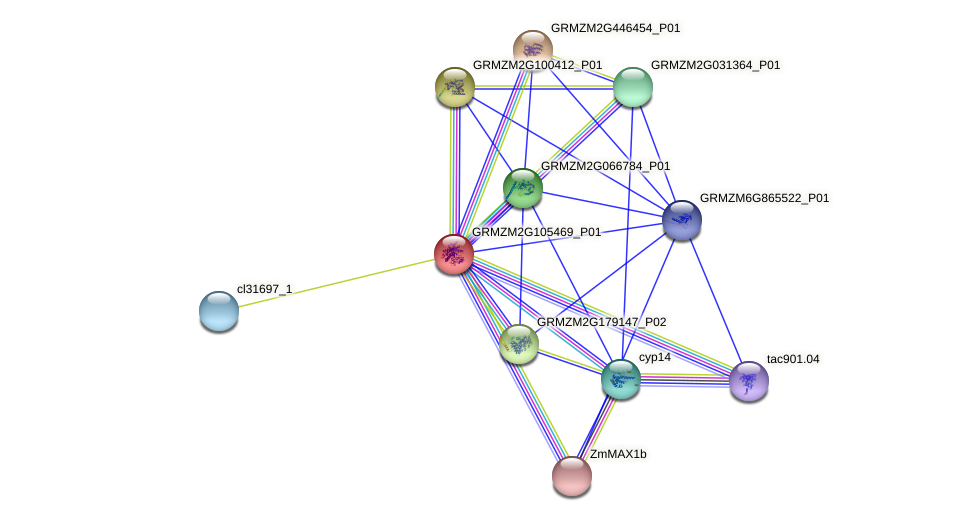 GRMZM2G105469_P01 protein (Zea mays) - STRING interaction network