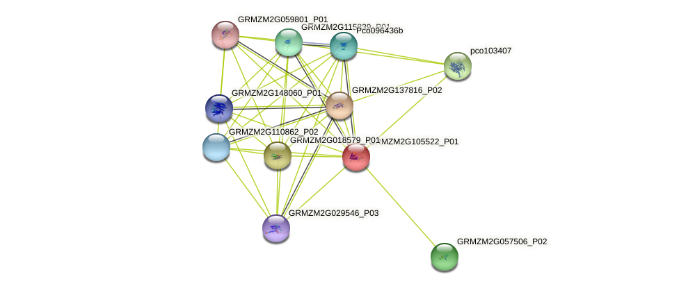 GRMZM2G105522_P01 protein (Zea mays) - STRING interaction network