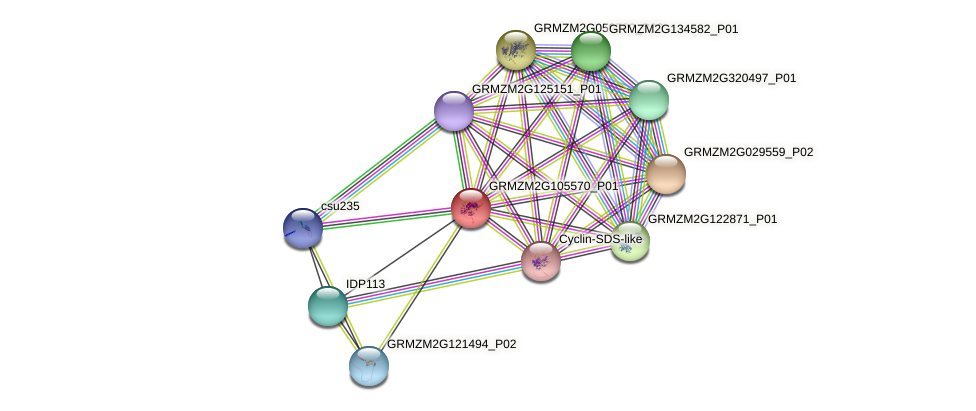 Zm.14399 protein (Zea mays) - STRING interaction network