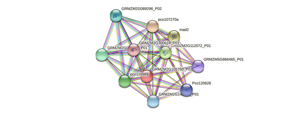 GRMZM2G105750_P03 protein (Zea mays) - STRING interaction network