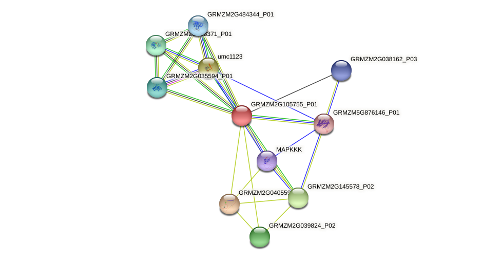 GRMZM2G105755_P01 protein (Zea mays) - STRING interaction network