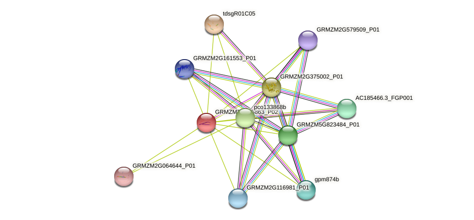 Zm.84595 protein (Zea mays) - STRING interaction network