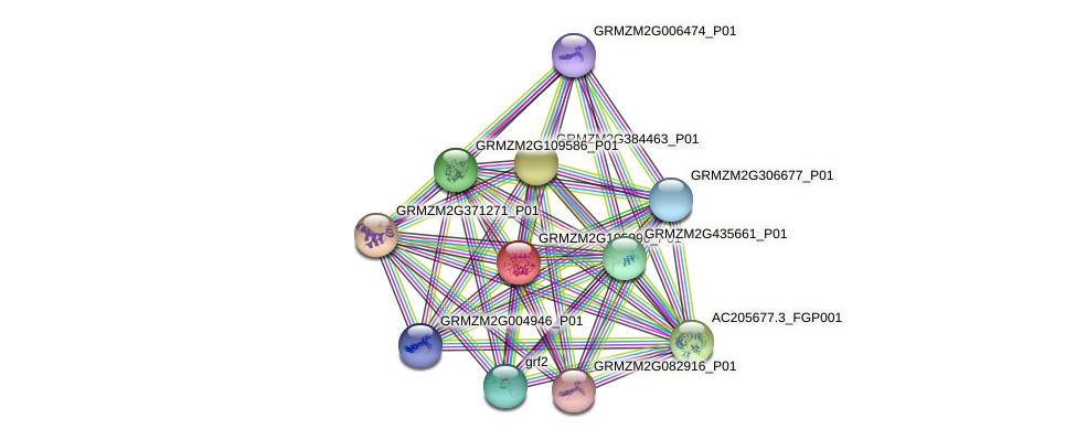 GRMZM2G105996_P01 protein (Zea mays) - STRING interaction network