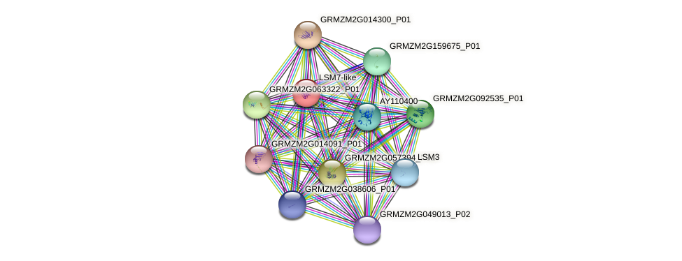 GRMZM2G106105_P01 protein (Zea mays) - STRING interaction network