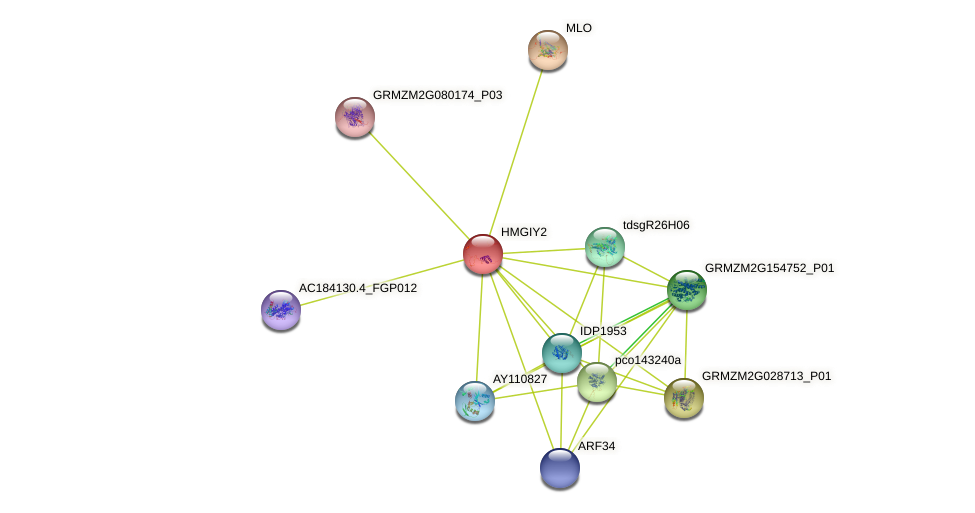 HMGIY2 protein (Zea mays) - STRING interaction network