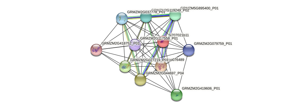 GRMZM2G106164_P01 protein (Zea mays) - STRING interaction network