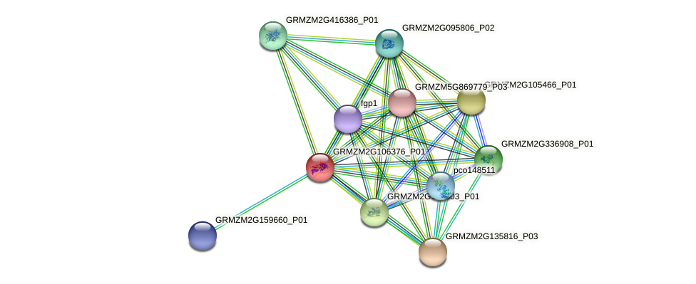 GRMZM2G106376_P01 protein (Zea mays) - STRING interaction network