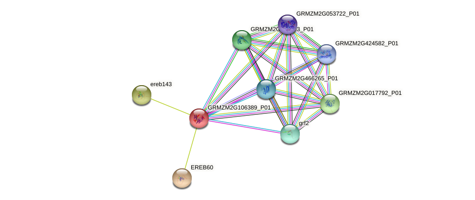 GRMZM2G106389_P01 protein (Zea mays) - STRING interaction network