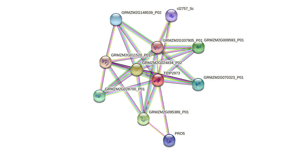 TIDP2973 protein (Zea mays) - STRING interaction network