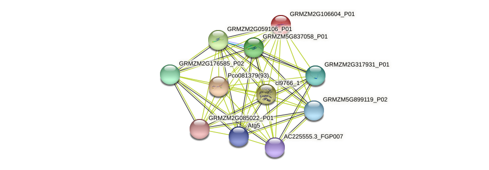 Zm.28596 protein (Zea mays) - STRING interaction network