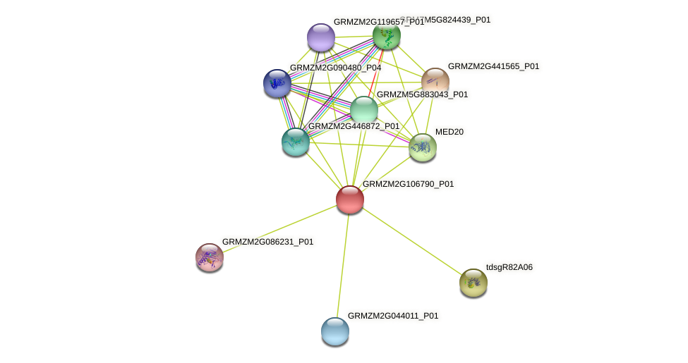 GRMZM2G106790_P01 protein (Zea mays) - STRING interaction network