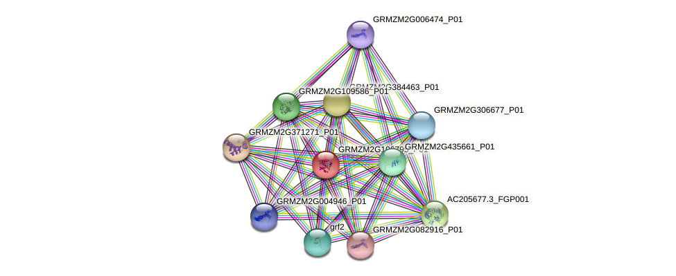 GRMZM2G106795_P01 protein (Zea mays) - STRING interaction network