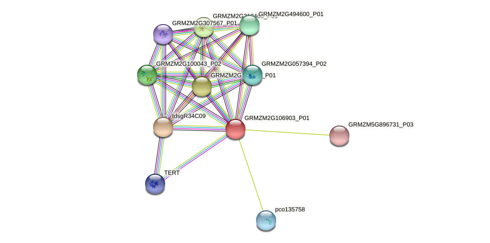 Zm.6219 protein (Zea mays) - STRING interaction network