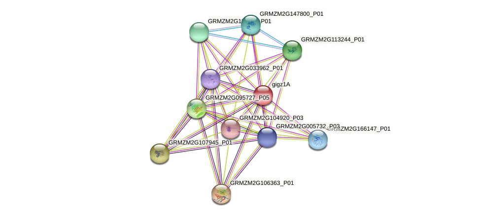 gigz1A protein (Zea mays) - STRING interaction network