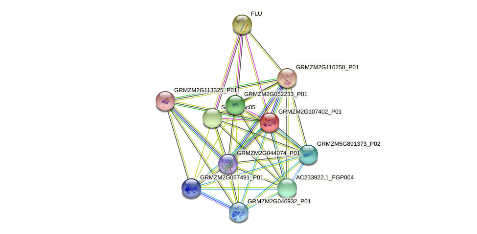 GRMZM2G107402_P01 protein (Zea mays) - STRING interaction network