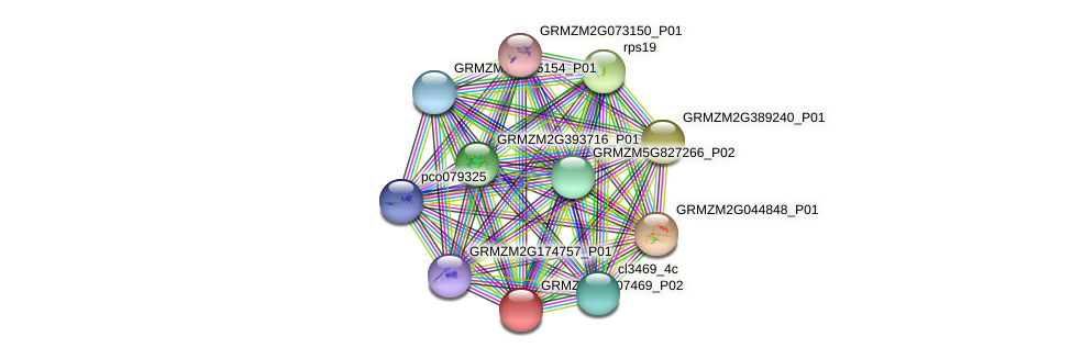 GRMZM2G107469_P02 protein (Zea mays) - STRING interaction network
