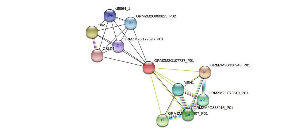 GRMZM2G107737_P01 protein (Zea mays) - STRING interaction network