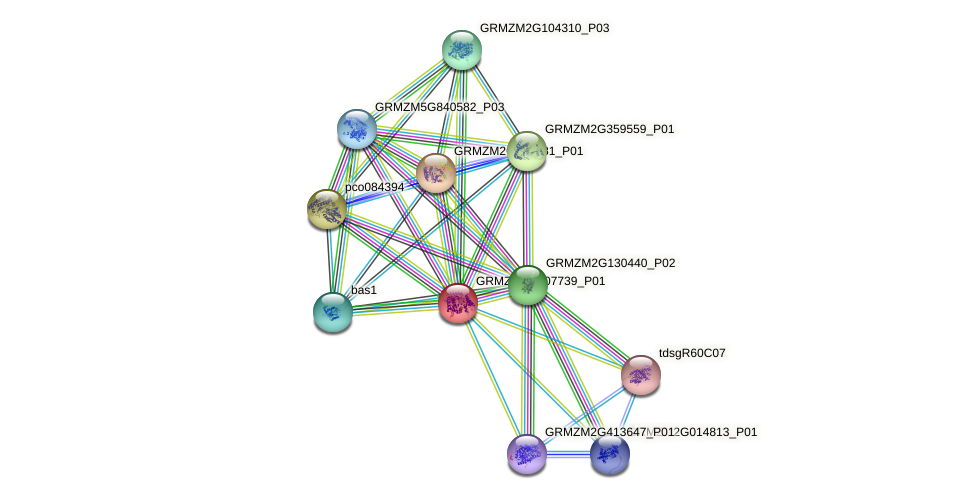 GRMZM2G107739_P01 protein (Zea mays) - STRING interaction network