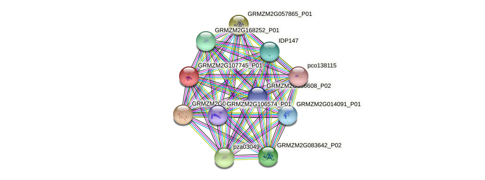 Zm.92508 protein (Zea mays) - STRING interaction network