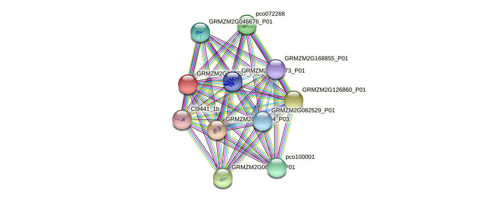 GRMZM2G107757_P01 protein (Zea mays) - STRING interaction network