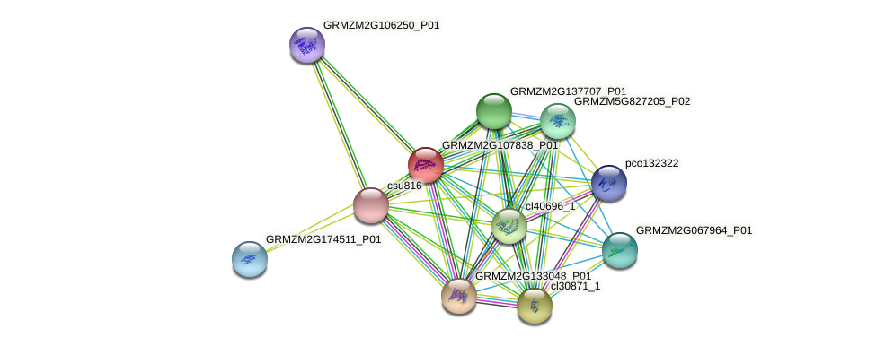 GRMZM2G107838_P01 protein (Zea mays) - STRING interaction network