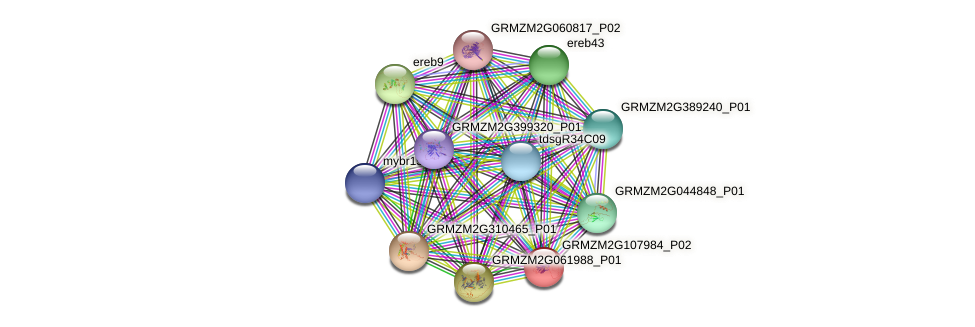 GRMZM2G107984_P01 protein (Zea mays) - STRING interaction network
