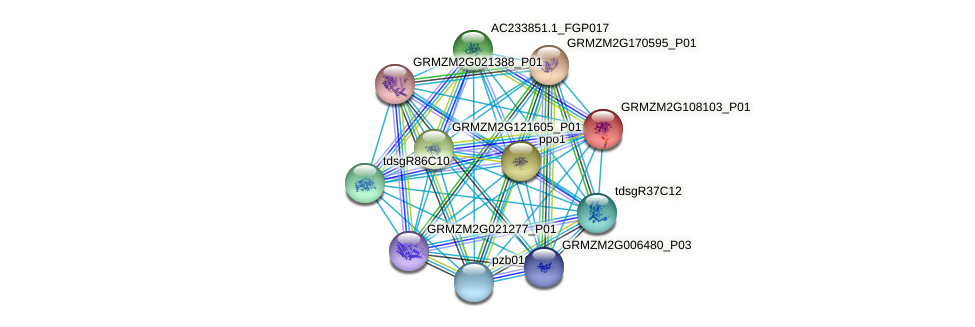 Zm.37925 protein (Zea mays) - STRING interaction network