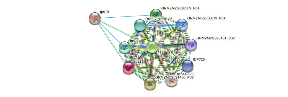 sqs1 protein (Zea mays) - STRING interaction network