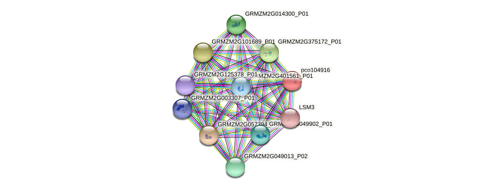 pco104916 protein (Zea mays) - STRING interaction network