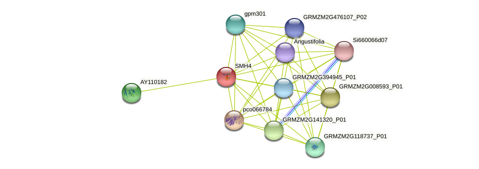 SMH4 protein (Zea mays) - STRING interaction network