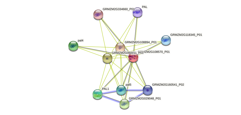 GRMZM2G108570_P01 protein (Zea mays) - STRING interaction network