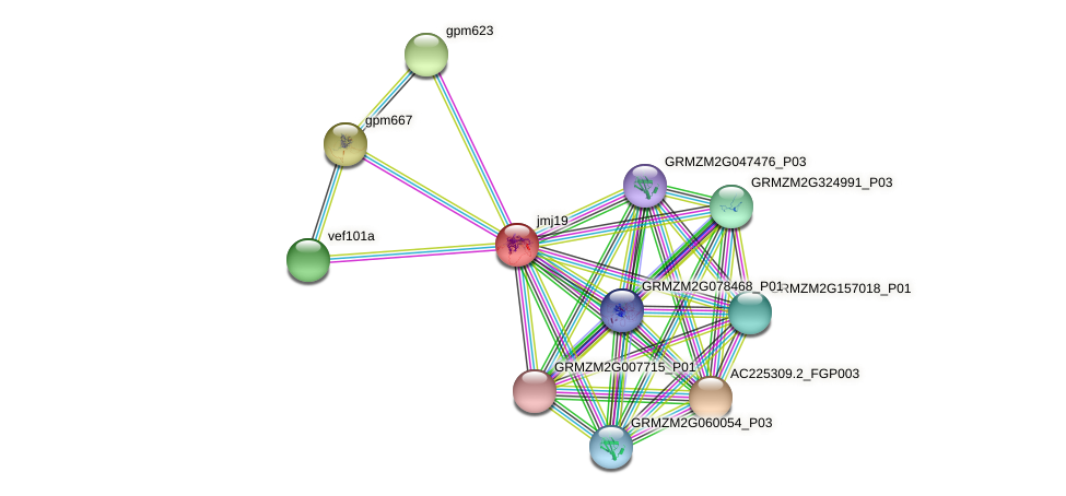 jmj19 protein (Zea mays) - STRING interaction network