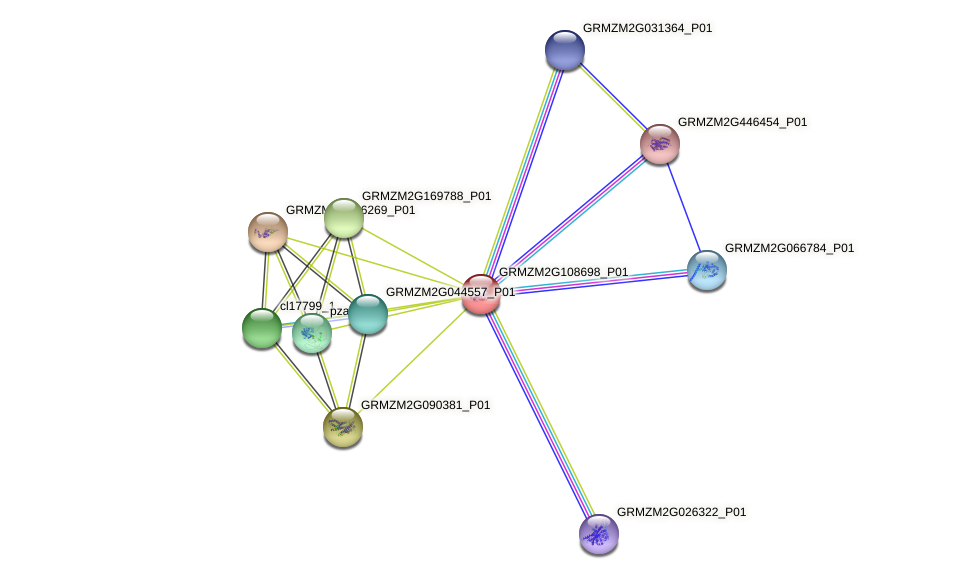 GRMZM2G108698_P01 protein (Zea mays) - STRING interaction network