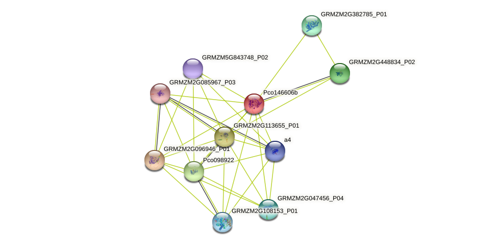 Zm.27650 protein (Zea mays) - STRING interaction network