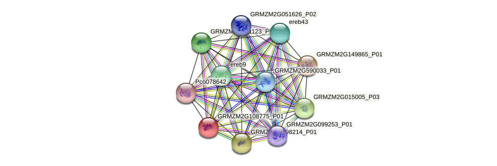 GRMZM2G108775_P01 protein (Zea mays) - STRING interaction network