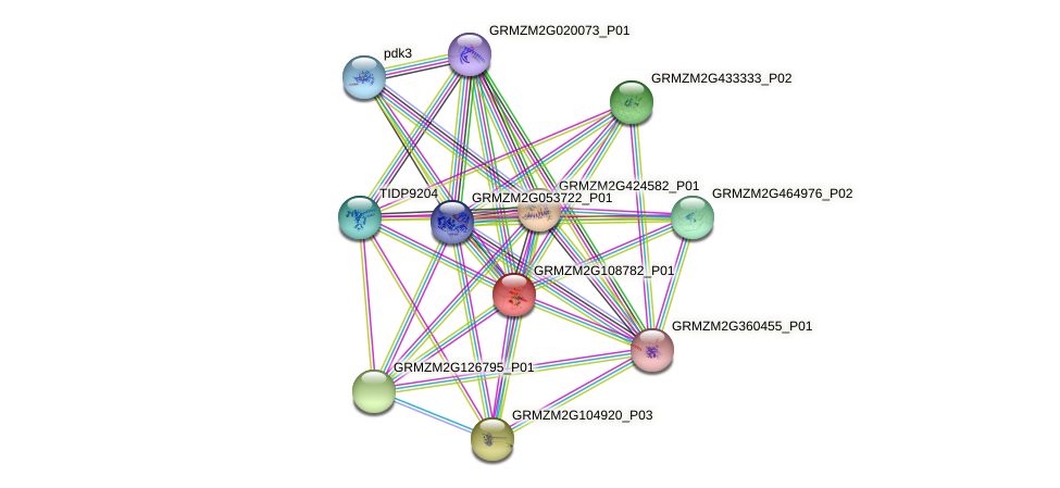 GRMZM2G108782_P01 protein (Zea mays) - STRING interaction network