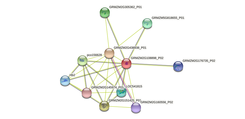 GRMZM2G108898_P02 protein (Zea mays) - STRING interaction network