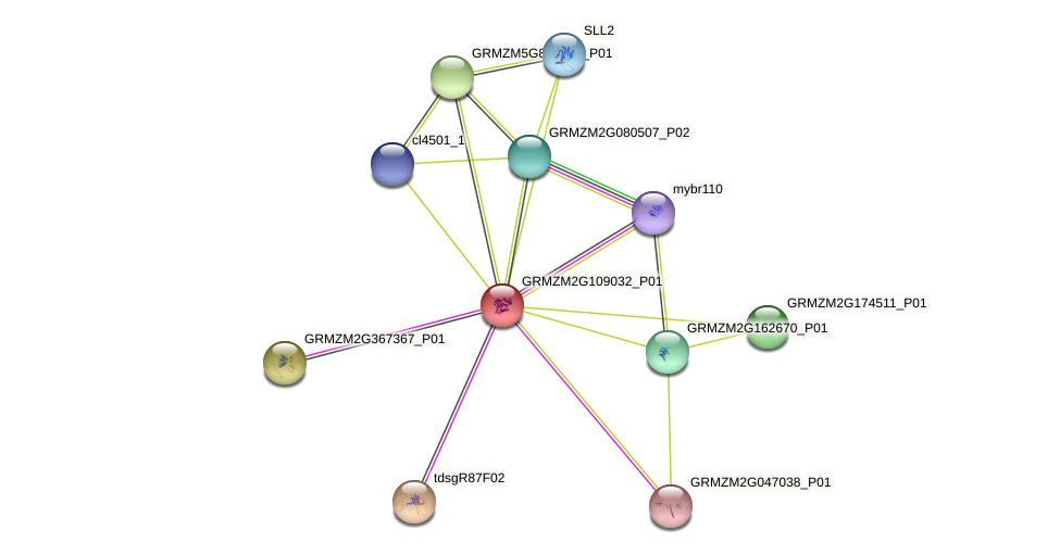 Zm.30231 protein (Zea mays) - STRING interaction network