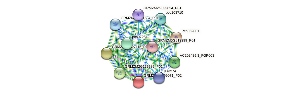 GRMZM2G109071_P02 protein (Zea mays) - STRING interaction network