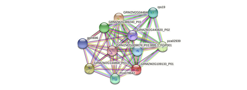 GRMZM2G109133_P01 protein (Zea mays) - STRING interaction network