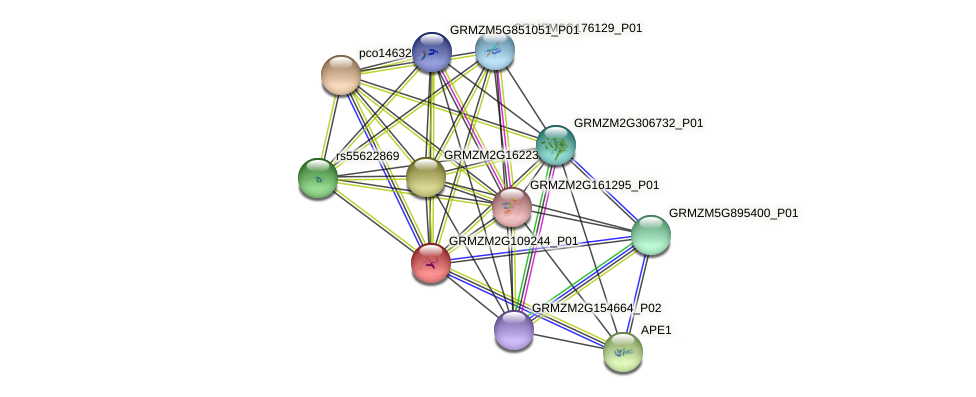 TIDP3339 protein (Zea mays) - STRING interaction network