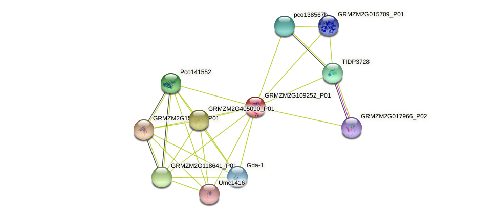 GRMZM2G109252_P01 protein (Zea mays) - STRING interaction network