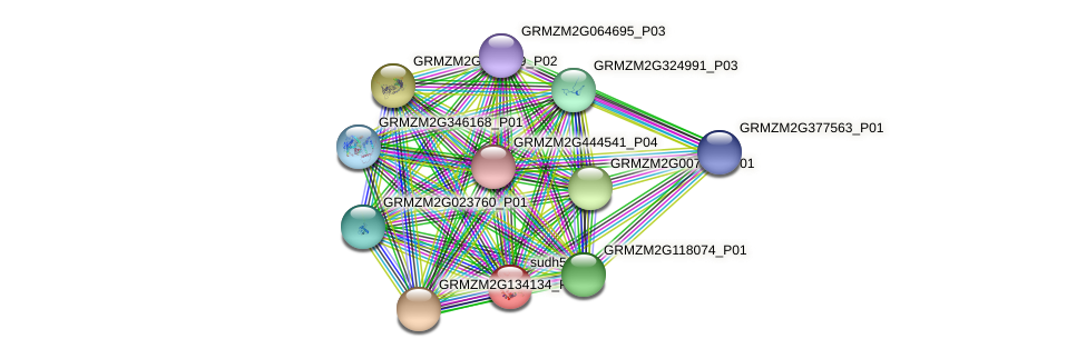 sudh5 protein (Zea mays) - STRING interaction network