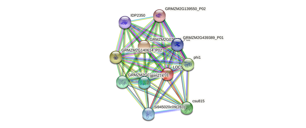 pgm2 protein (Zea mays) - STRING interaction network