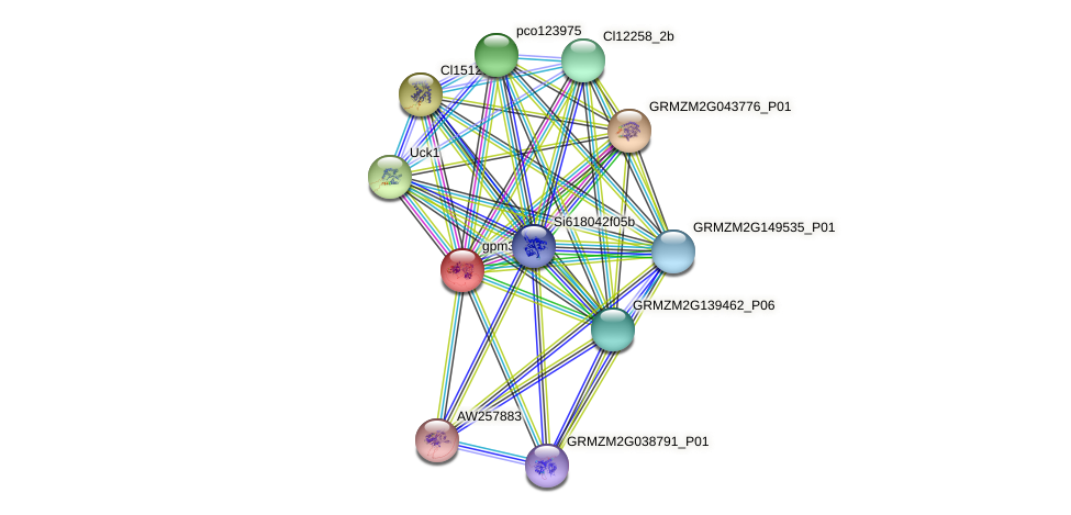 gpm370 protein (Zea mays) - STRING interaction network