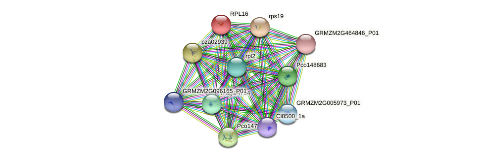 GRMZM2G109550_P01 protein (Zea mays) - STRING interaction network